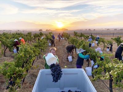 High Hopes Wine Co Eastern Peake